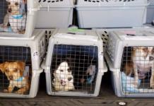 Pet Transporters