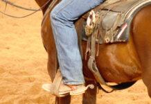 cinch jeans (3)